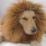 アマゾンのCMが犬が感動的と話題に!かわいそうな感じが逆にイイ!